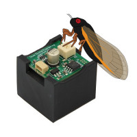 SoundBytes Cicada
